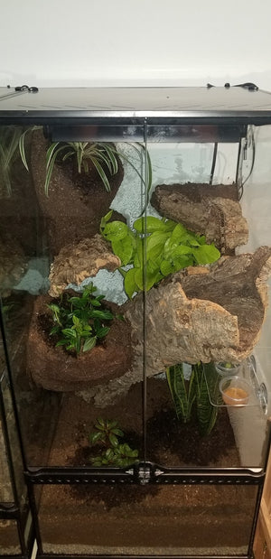 Replacement Lid for18x18 Terrarium