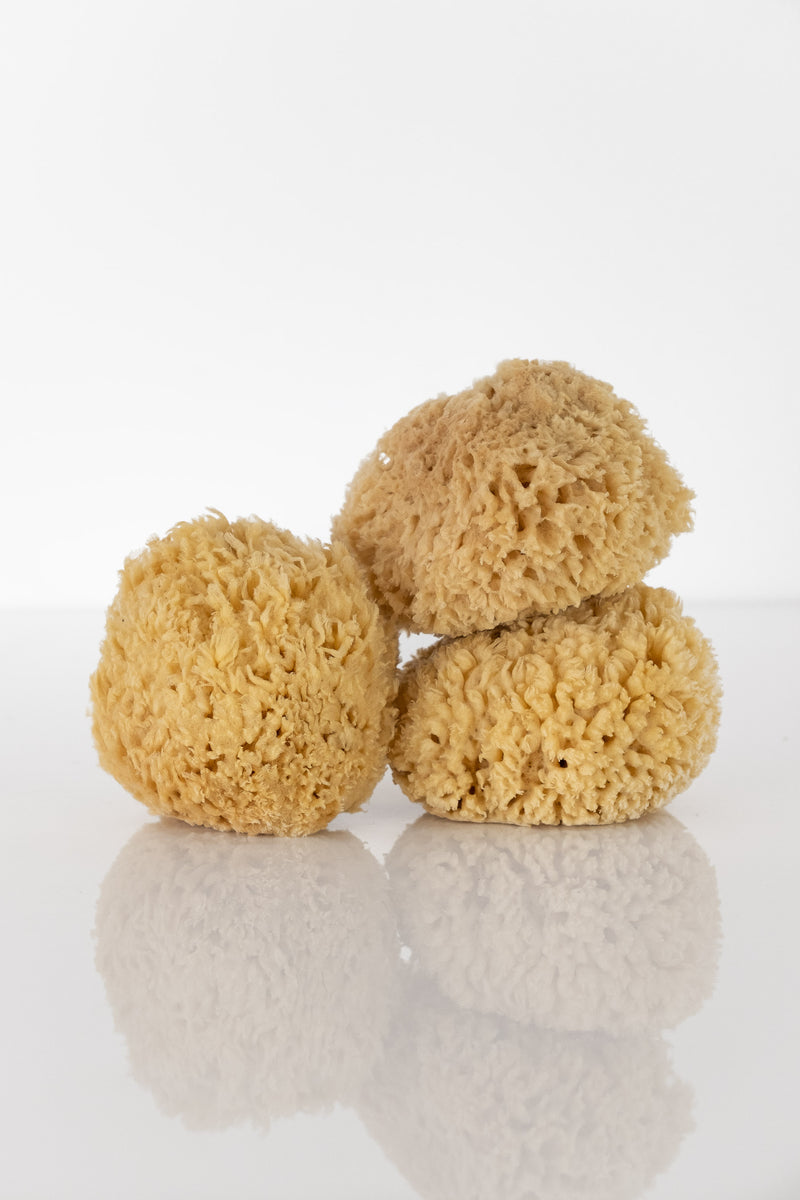 NATURAL SEA WOOL SPONGE