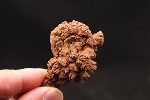 Fossilized Dino Poop