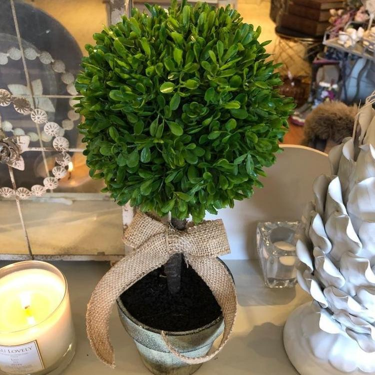 Miniature Green Boxwood Ball in Brown Pot