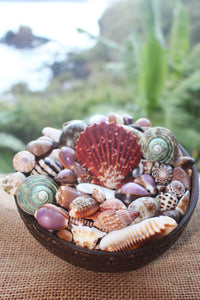 Seashells in a coconut bowl from Nuku Hiva Island