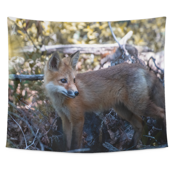 """NICK WILLIAMS: Red Fox"" Tapestry (Small, Medium, and Large Sizes Available)"