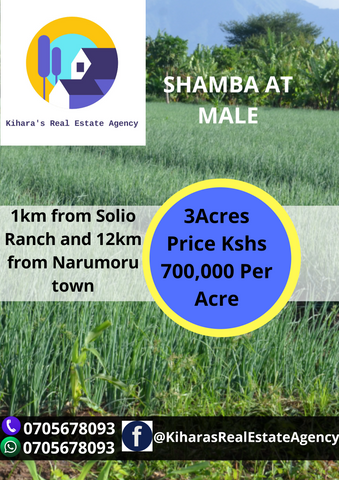 3 acres shamba at Male, 1km from solio ranch and 12km from Narumoru town.