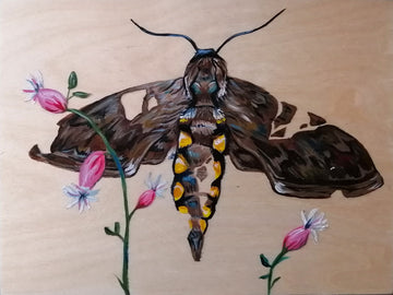 Five Spotted Hawk Moth