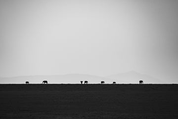 Elephants on the Horizon