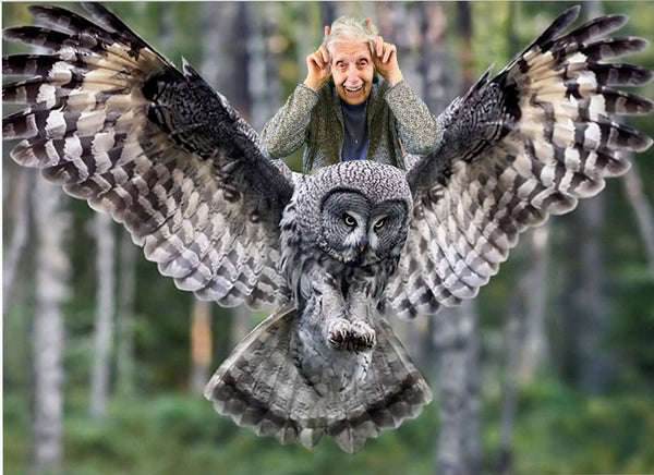 Dorothy Rides the Great Grey Owl
