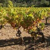 Lessons From The Vine - December 2, 2012