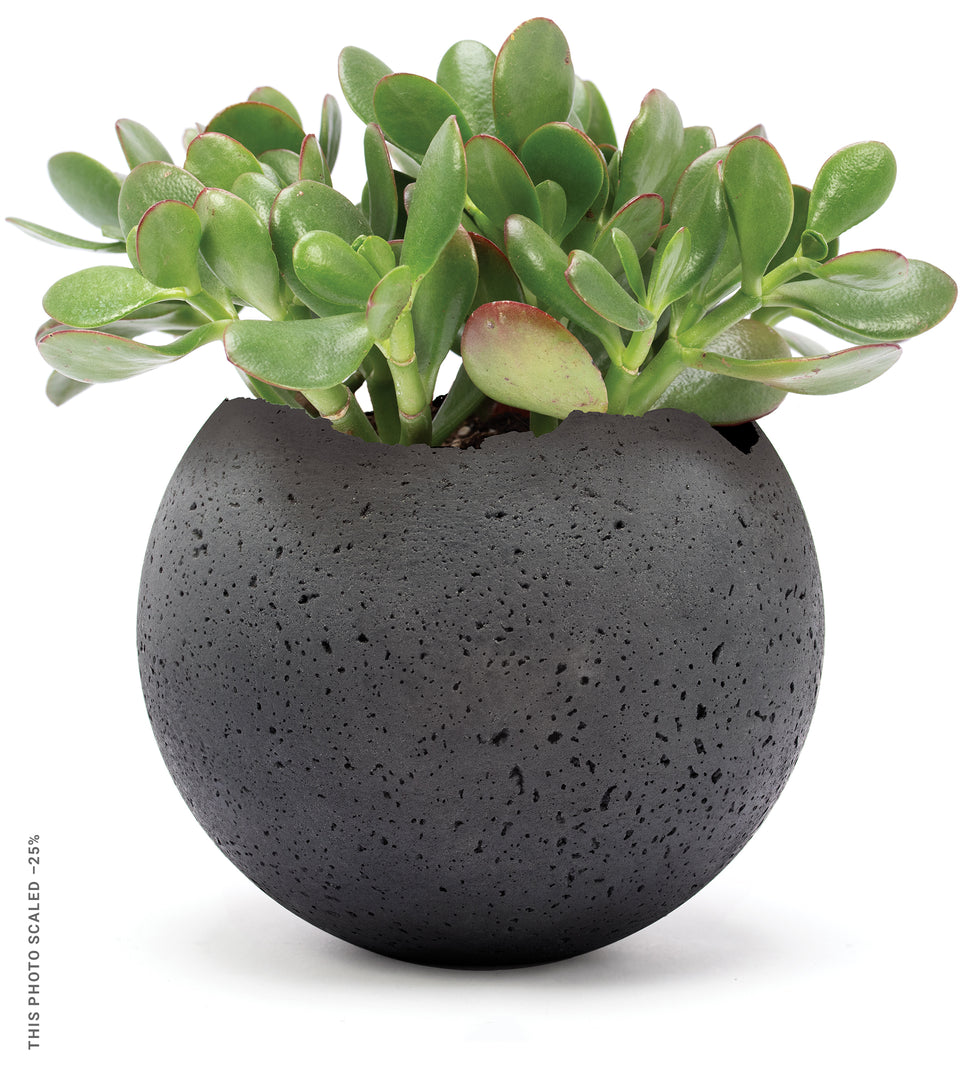 Charcoal vessel sphere with planted jade.
