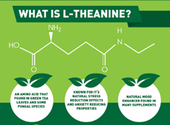 what is L-Theanine