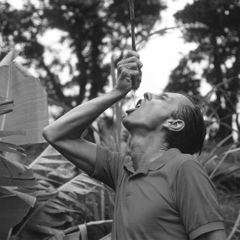 Black and white image of Paul Mitchell squeezing awapuhi plant juice into his mouth in Hawaii