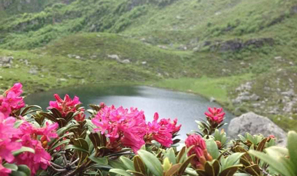 HONEY OF THE MONTH: JUNE'S RHODODENDRON