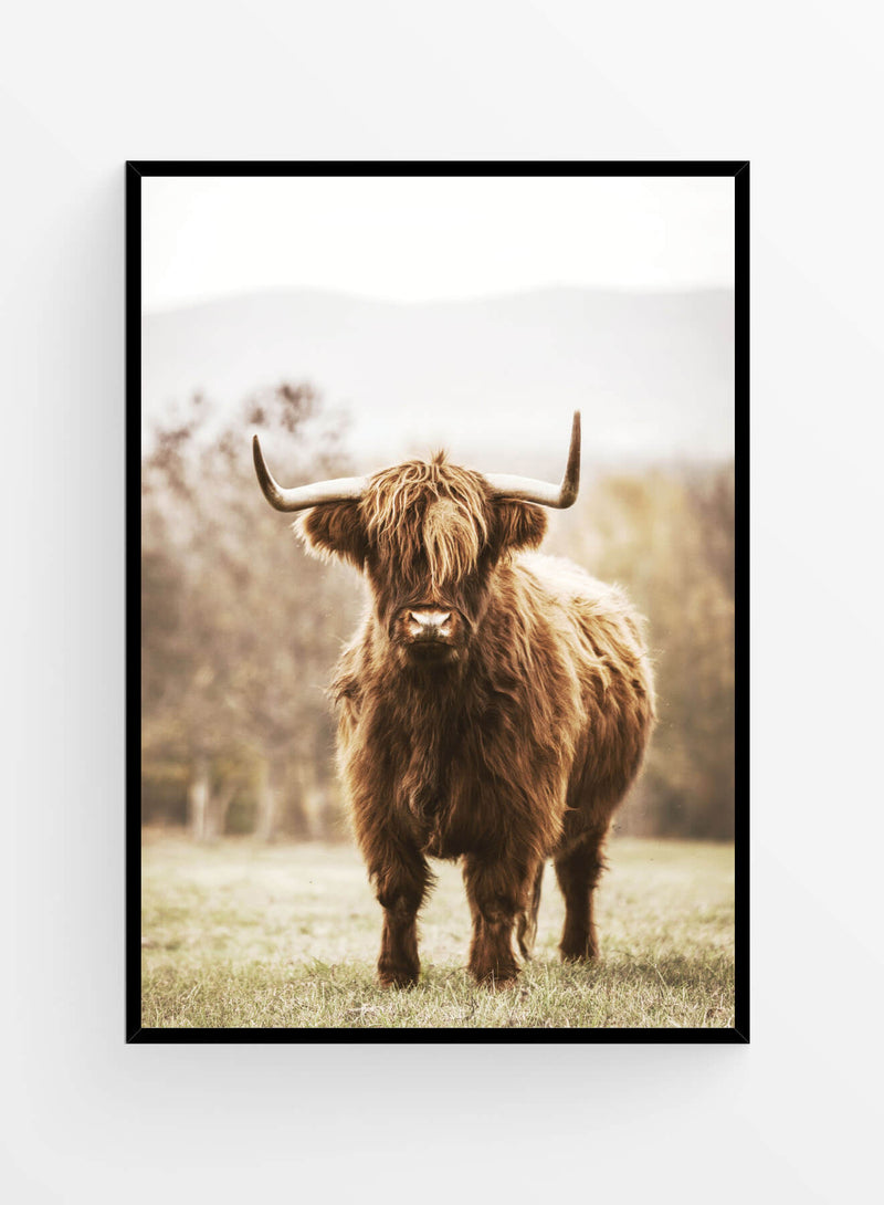 Highlands cattle | Art print