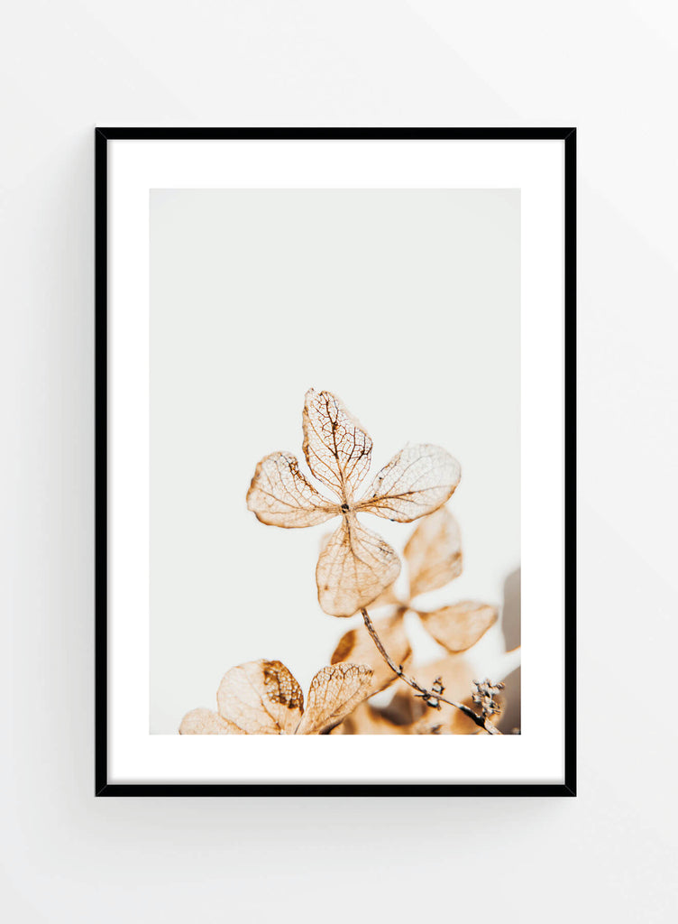 Delicate flower | Poster