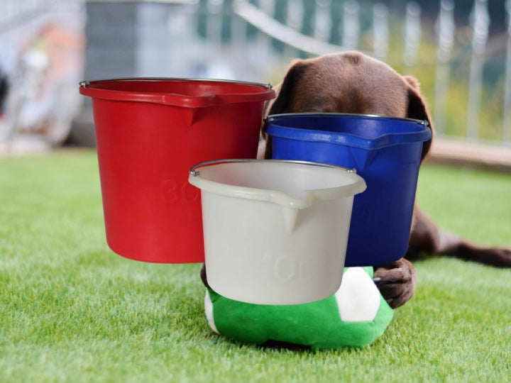 Dog playing with a ball in the garden with a white, blue & red Pioneer plastic bucket in the the foreground
