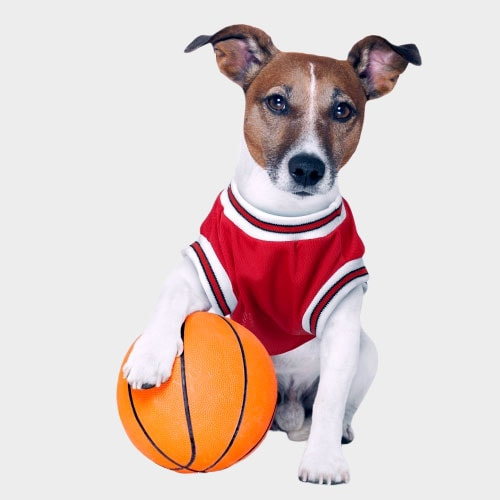 Basketball Dog Jersey