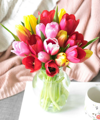 Sunshine Rainbow Tulips - 20 Stems - al-qahwa