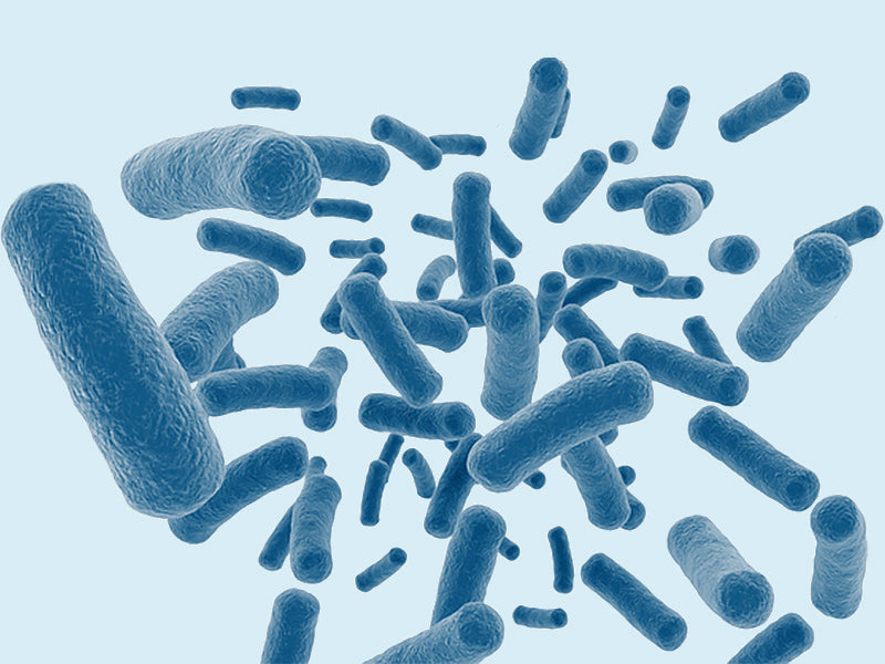Probiotic for Lactic Acid in BV Treatment