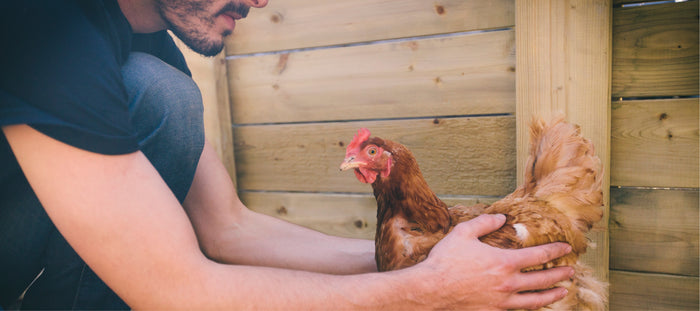 10 Reasons to Welcome Chickens to Your Home