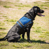 Mesh Working Dog Vest- Black & White Patch
