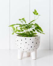 Load image into Gallery viewer, Planter - Spotted Around Town- 10x10