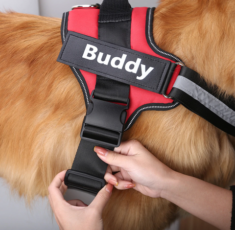 A dog wearing an Expressiffy dog harness with the name Buddy on it