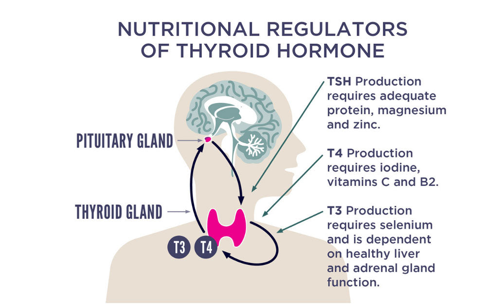 10 Tips For Better Thyroid Health Happy Healthy You