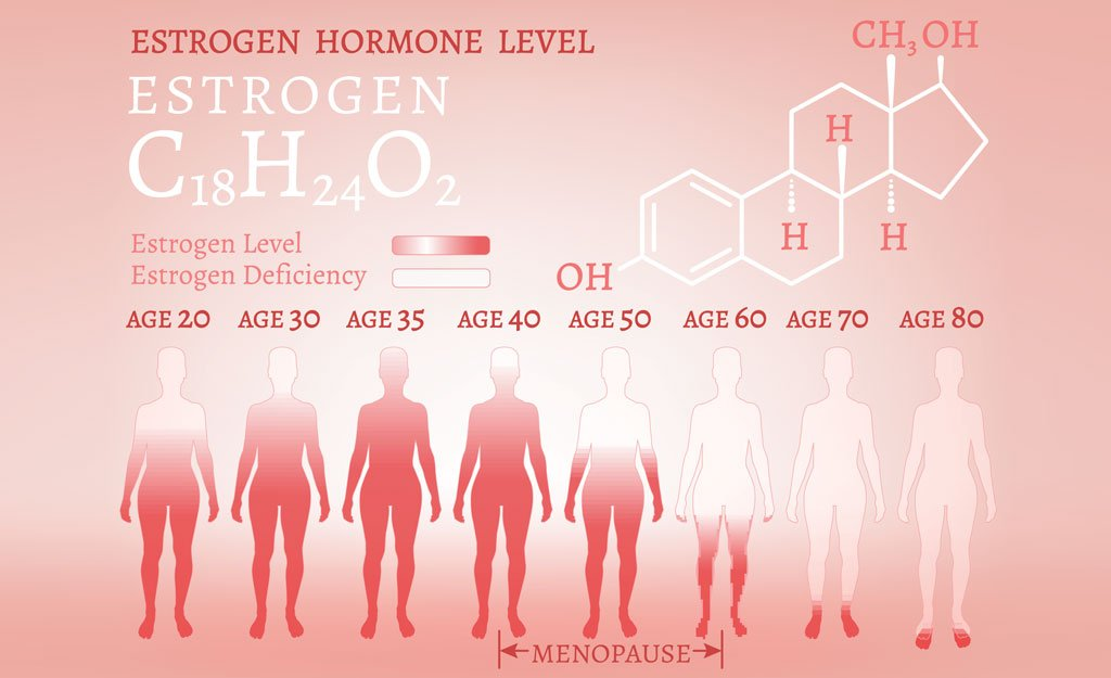 Basic Facts About Oestrogen, Progesterone & Androgens