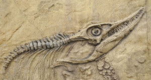 How do you teach kids about fossils?