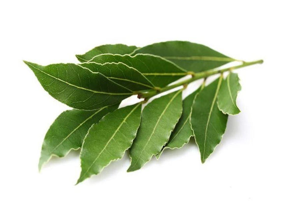 Camphor Essential Oil 100% pure