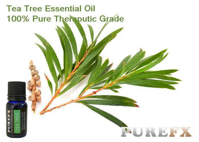 tea_Tree_1_SDURP5VKM44D.jpg