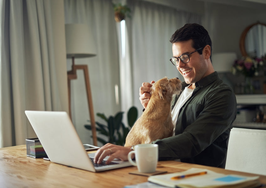 6 Clever Ways To Keep Your Dog Away From Your Work Desk