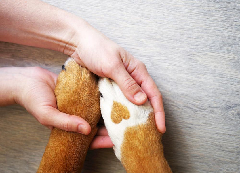 3 Practical Ways to Help Animals in Need