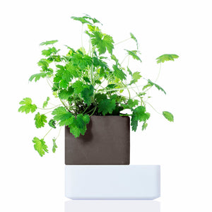 UNO: The most natural self-watering terracotta pot