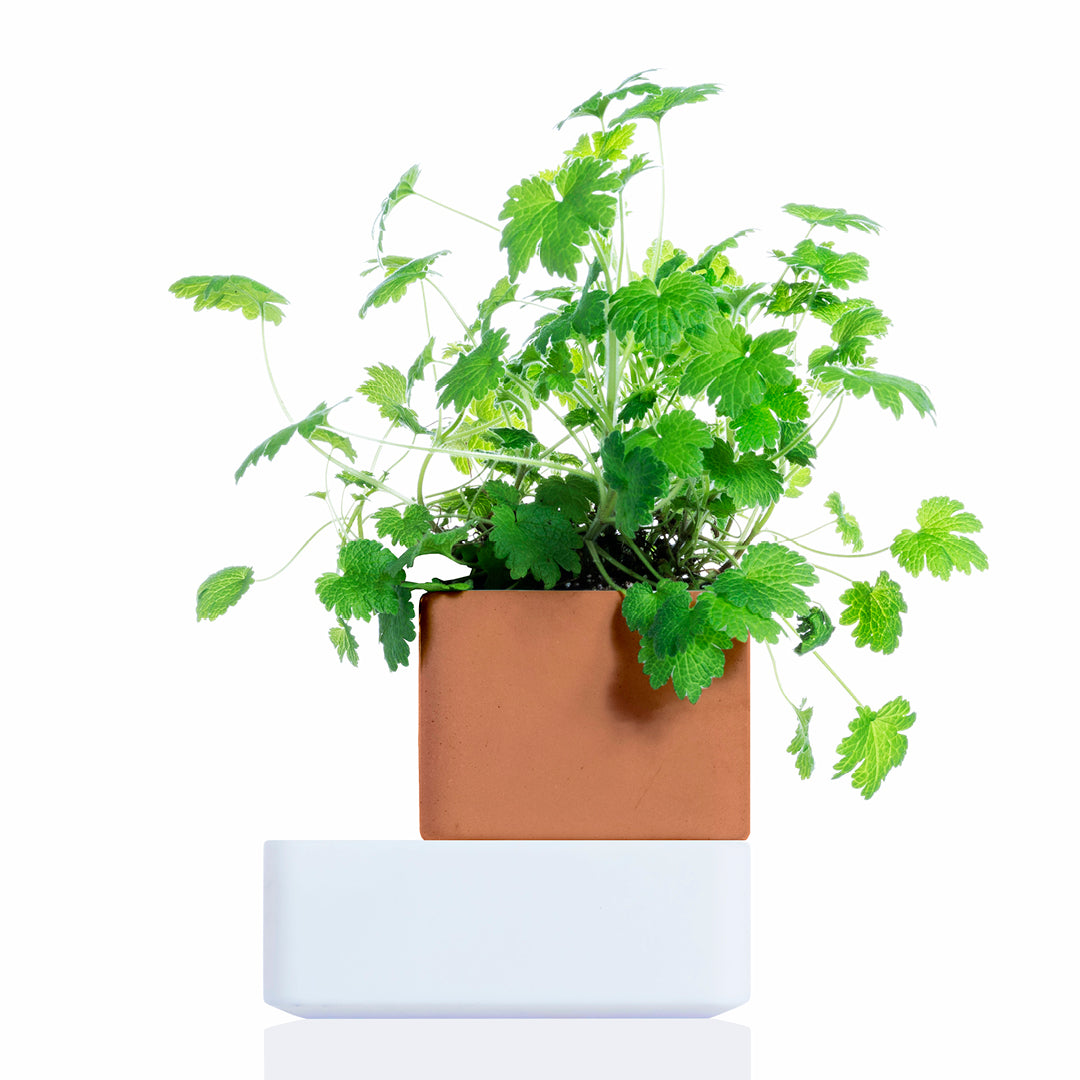 UNO: natural self-watering terracotta pot