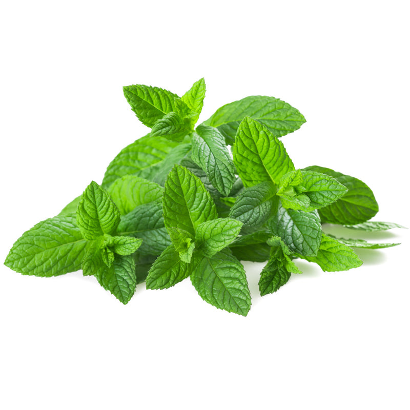 Chocolate Mint (Mentha Piperita Var. Chocolate)