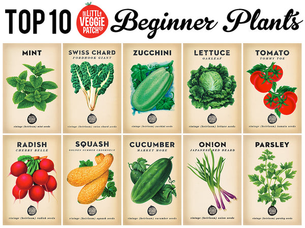 10 Best Beginner plants