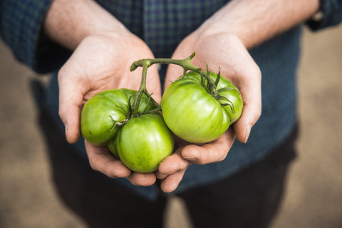 holding green tomatoes