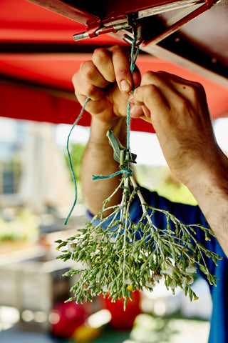hanging seed head up to dry