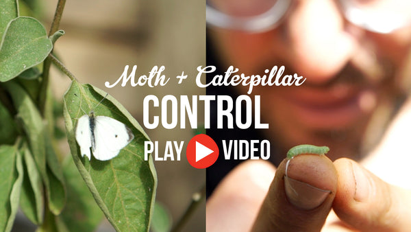Moth and Caterpillar Control a video by The Little Veggie Patch Co