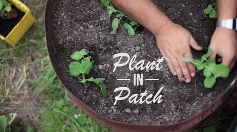 Plant Toilet Paper Rolls in Patch
