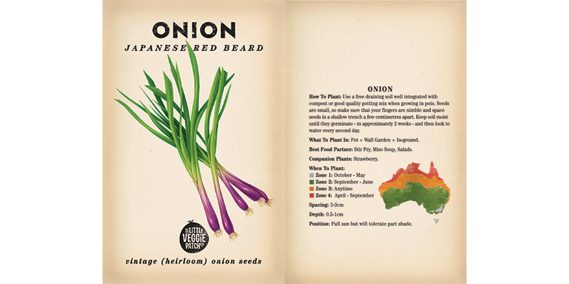Onion 'Japanese Red Beard' Heirloom Vegetable Seeds