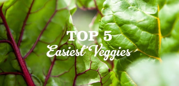 Easiest plants to grow according to Little Veggie Patch Co