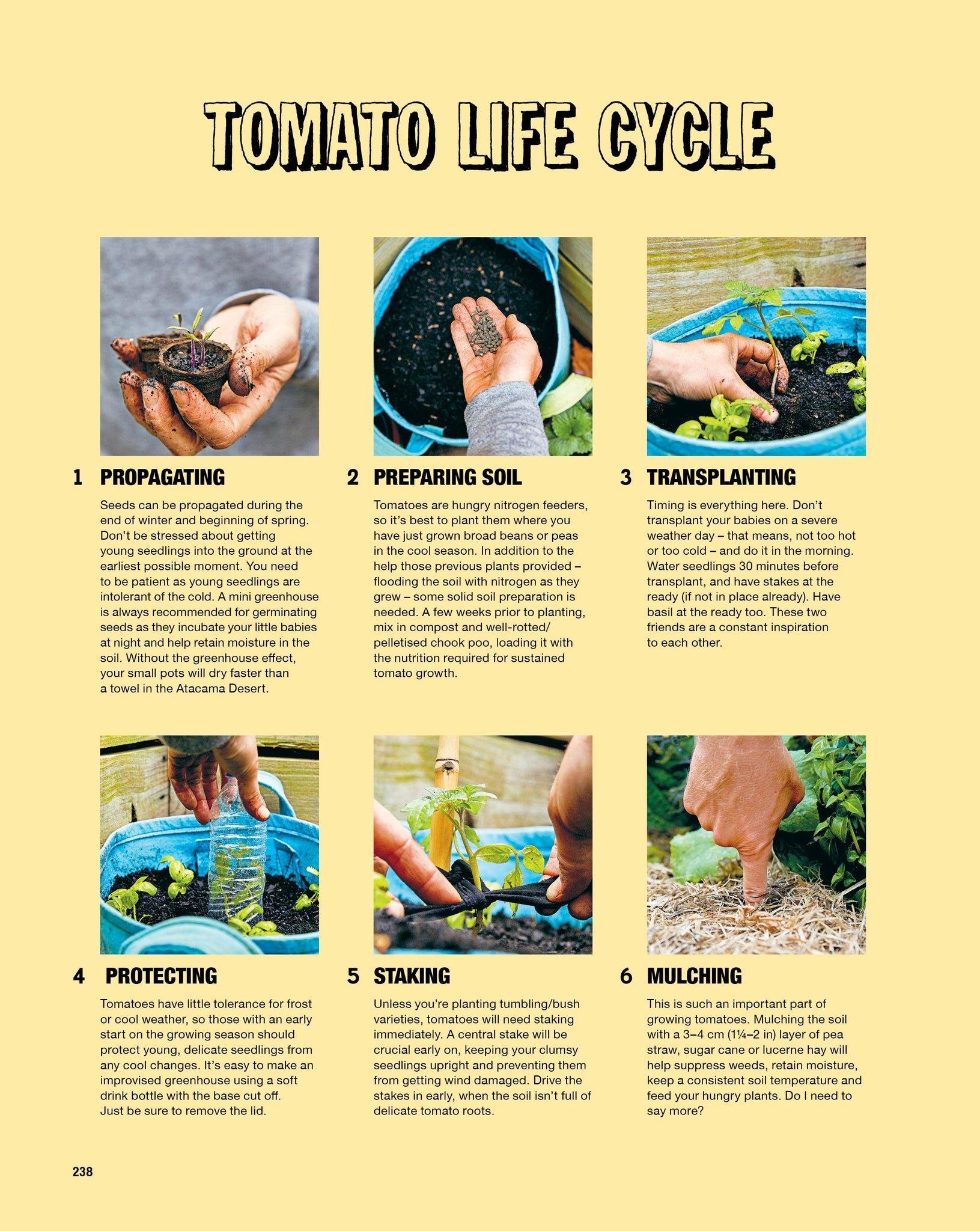 Tomato Life Cycle from Grow Food Anywhere