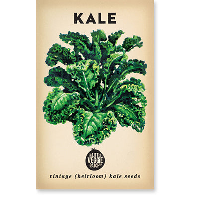 Kale 'Dwarf Blue' Heirloom Seeds
