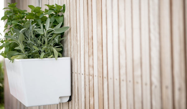 Glowpear Mini Wall Planter