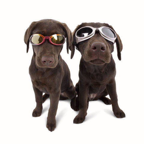 Doggles - All Colours