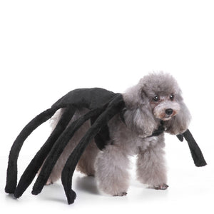 Halloween Spider Costume for Dogs