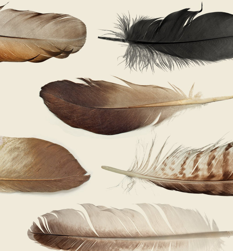 Brief  /  Feathers