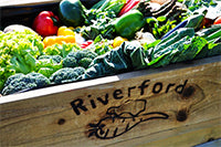 Riverford Farm Veg Box Devon