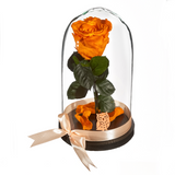 Beauty and The Beast Roses - Design 8